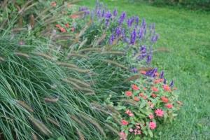 Fountain Grass, Zinnia & Salvia