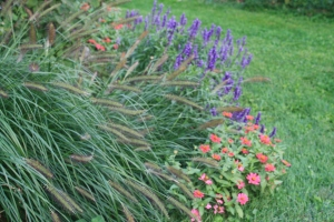 Fountain Grass, Zinnia & Salvia
