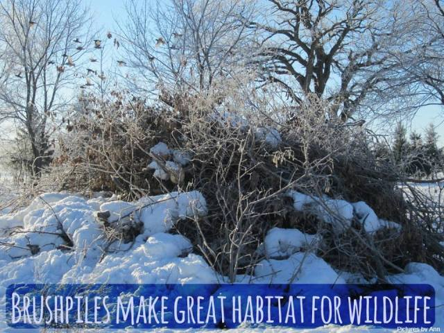 Brushpile: Wildlife Habitat