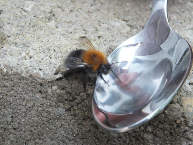 First Aid for Bees