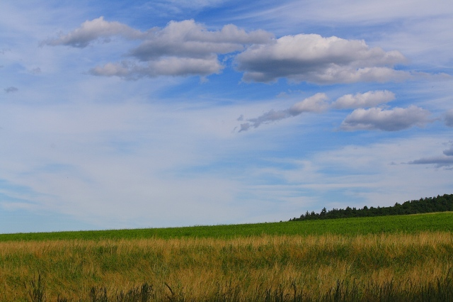 Acres of Sky