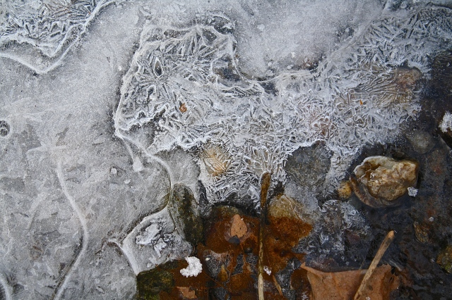 Frozen Lace