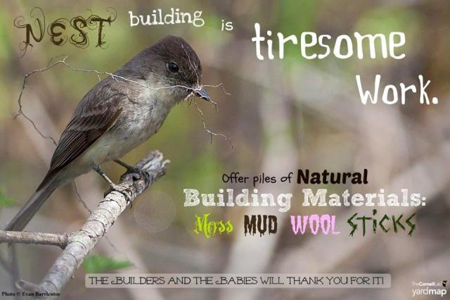 nestbuilding