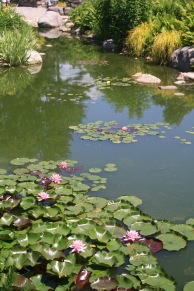 Waterlily pond - very Monet