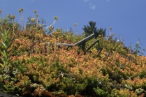 Mantis Sculpture atop living roof in Children's Garden