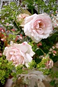 Rosa 'New Dawn' with Heuchera flowers