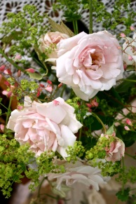 Rosa 'New Dawn' with Heuchera flowers