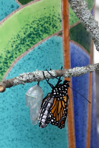 Emergence, pumping from abdomen into wings