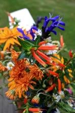 Cuphea ignea, Salvia guarantica