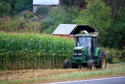 tractor cutting corn