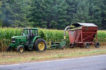 cutting corn
