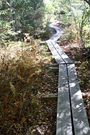 Hawley Bog boardwalk