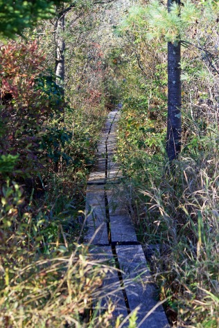 Narrow boardwalk