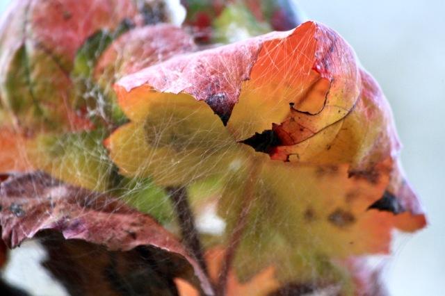 Fall cobwebs