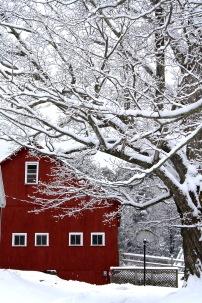 Snowy Barb