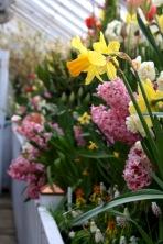 Narcissi & Hyacinth