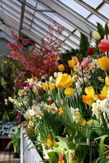 Mixed spring border