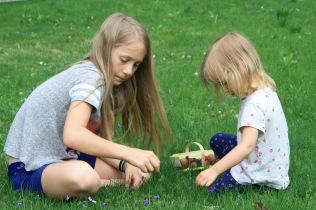 Gathering Violets