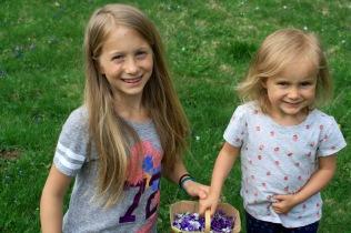 Violet Harvest