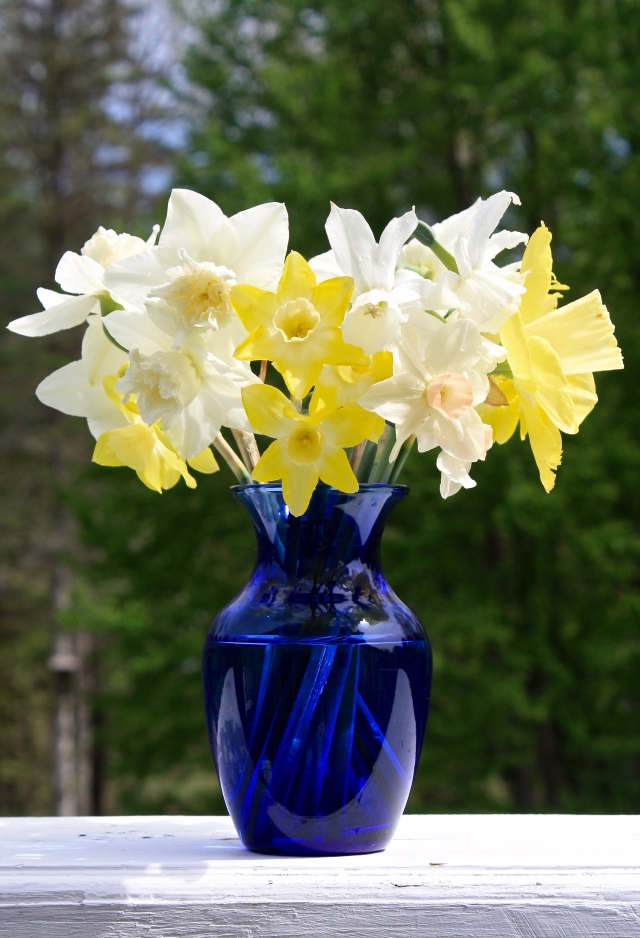 Blue vase of Narcissi