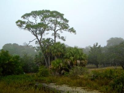Pine & palms