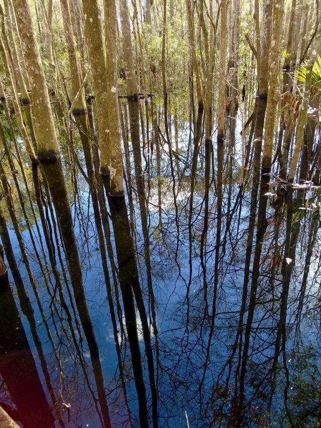 Swamp mirror