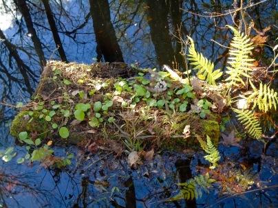 log island habitat