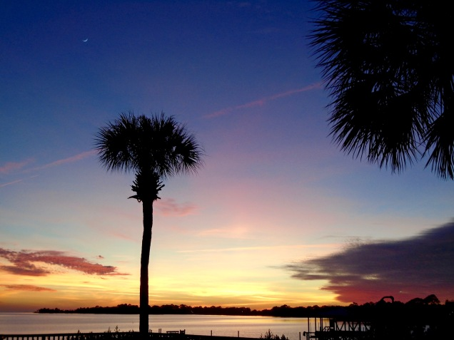 Sickle Moon & Palm sunset