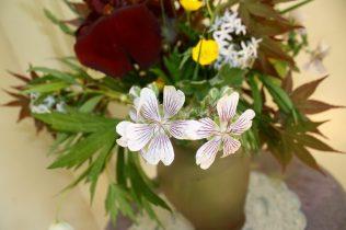 Geranium renardii