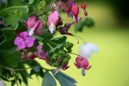 Geranium, Bleeding Heart, Lady's Mantle