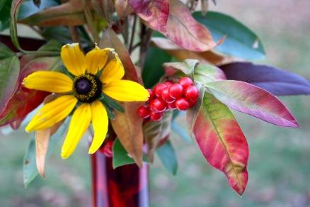 Rudbeckia, Winterberry, Lysimachia