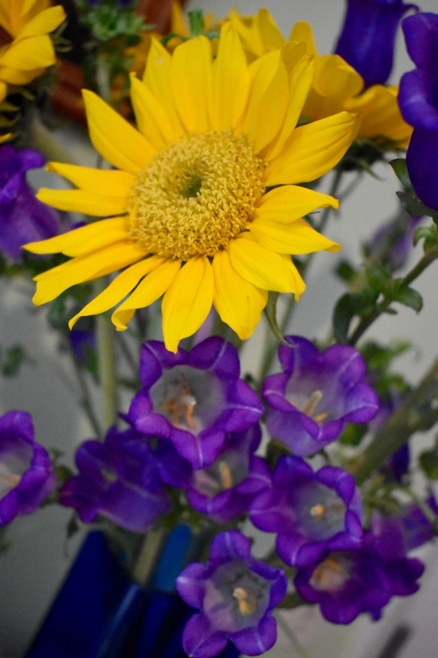 Sunflower, Campanula