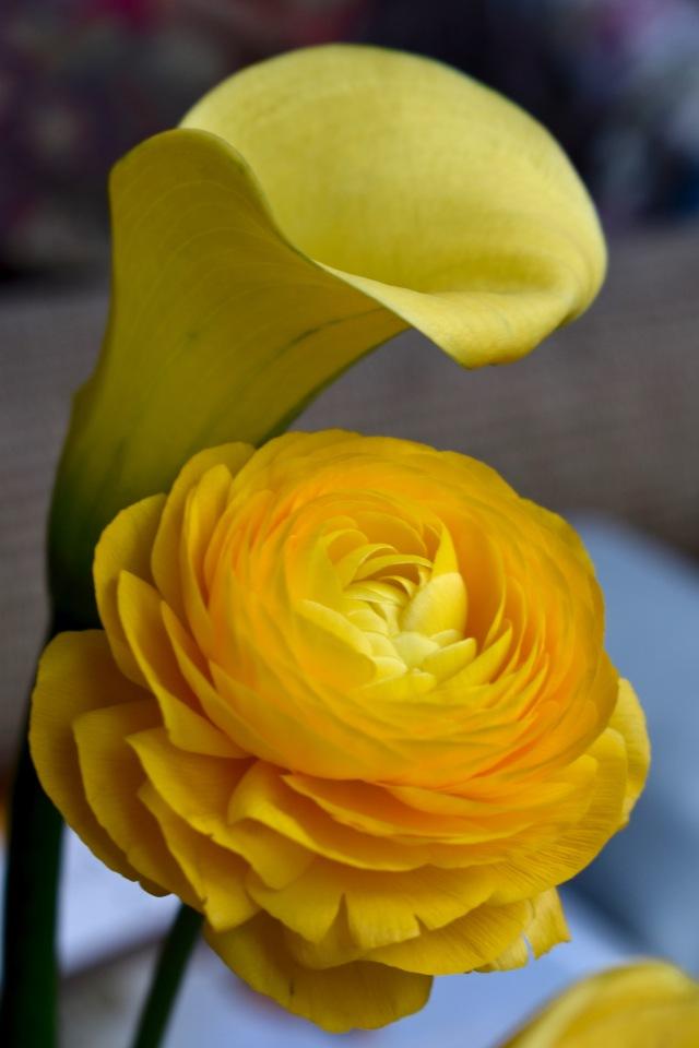Calla & Ranunculus