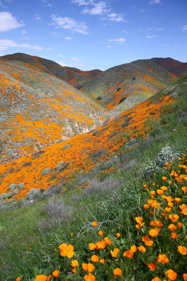 Super Bloom 2019