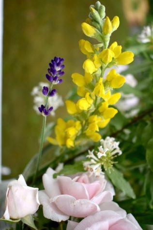 Lavender, Carolina Lupine