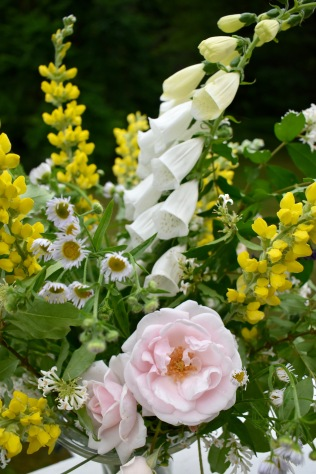 'New Dawn' Rose, white Foxglove, Carolina Lupine
