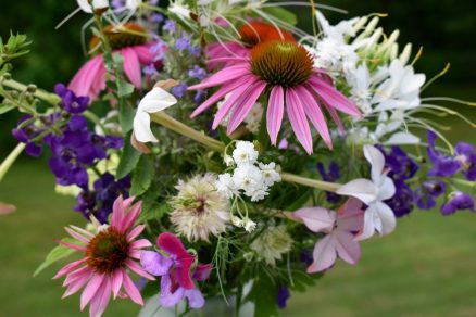 Echinacea and friends