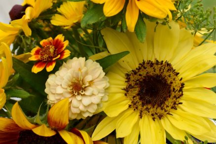 zinnias, sunflower