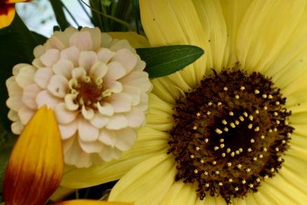 Zinnia, Sunflower