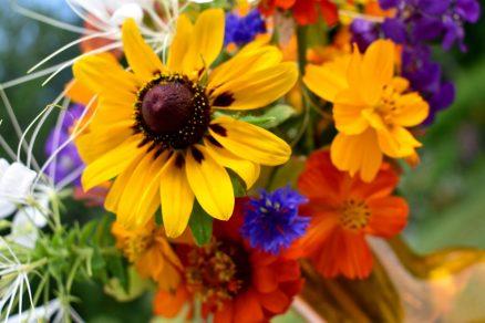 Rudbeckia, Cornflower, Cosmos