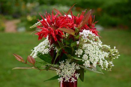Monarda flower arrangement