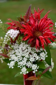 Monarda, Loosestrife, Queen Anne's Lace